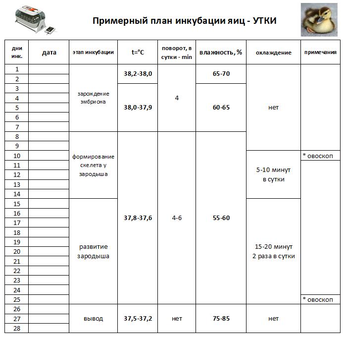 Инкубационные яйца мулардов, режим инкубации с таблицей, сроки