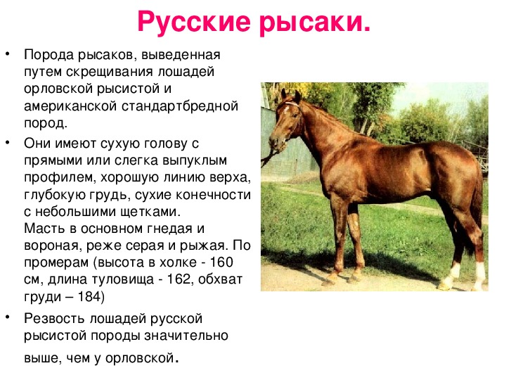 Русский рысак: история породы, характеристика, описание