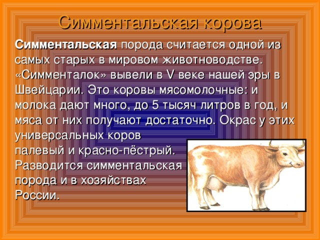 Симментальская порода коров: описание, фото, плюсы и минусы, уход и содержание
