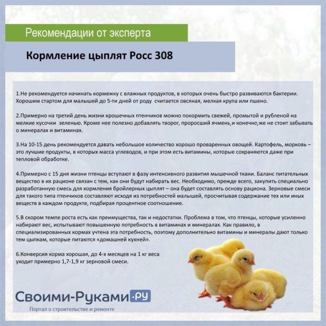 Описание и характеристики бройлерной породы кур росс 308, таблица веса по дням