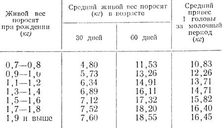 Вес свиньи - таблица измерения веса свиней