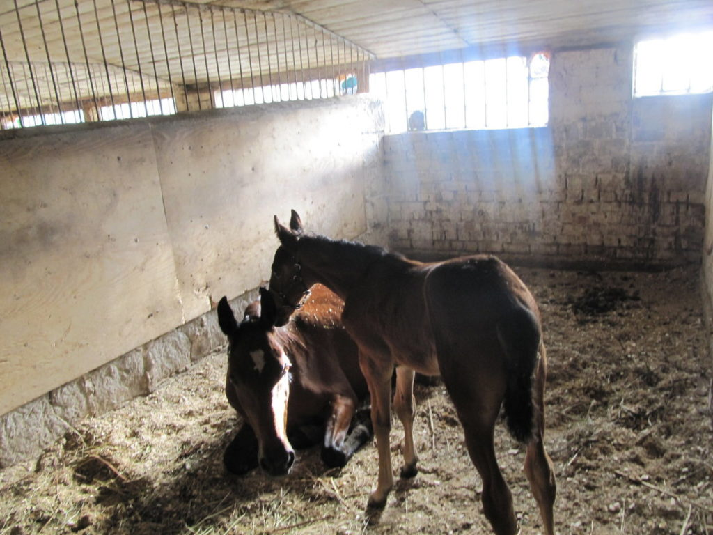 Что едят лошади: разновидности кормов и схемы кормления