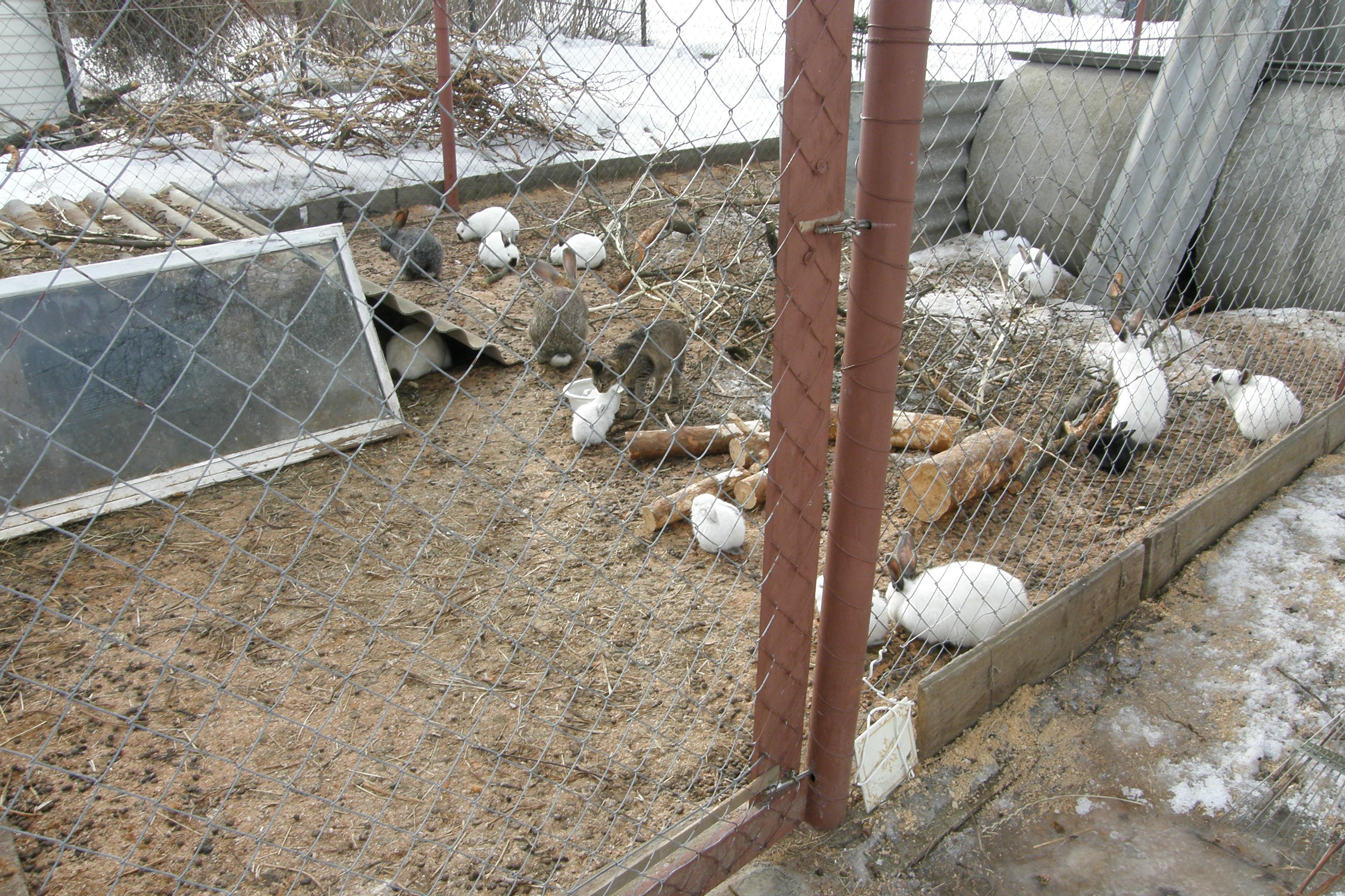 Содержание кроликов в вольерах: преимущества и недостатки