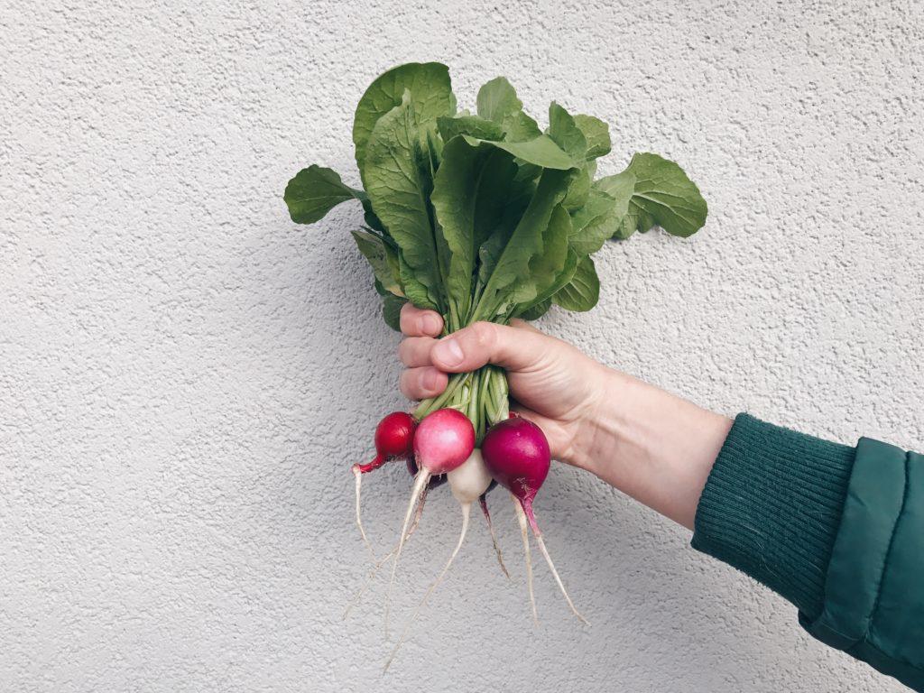 Можно ли есть листья редиски: полезные свойства и вред ботвы, противопоказания к применению и съедобна ли зелень, как употреблять в пищу, можно ли кушать детям?