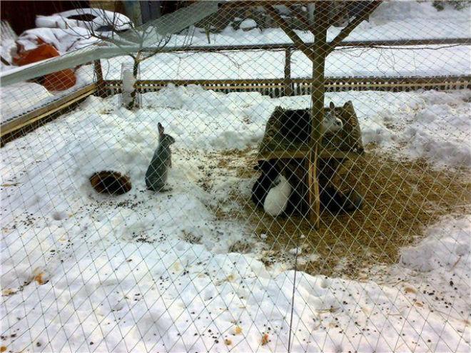 Содержание кроликов зимой на улице - декоративные кролики