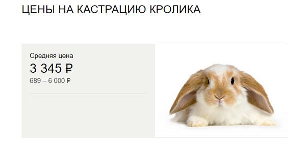 Кастрация кроликов: в каком возрасте проводят стерилизацию