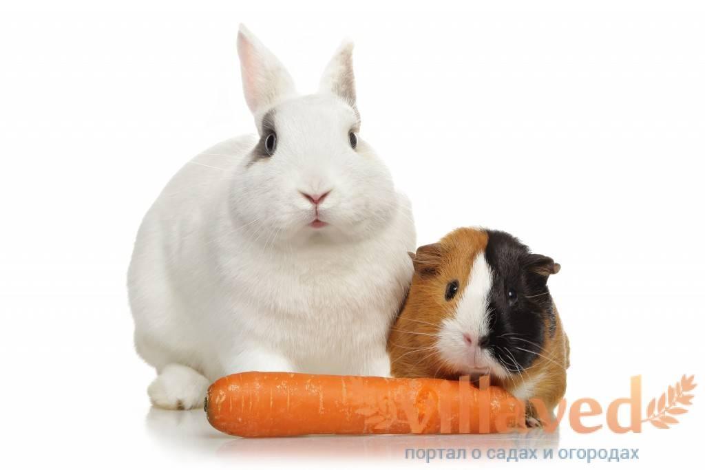Можно ли давать кроликам огурцы? польза, вред и правила кормления
