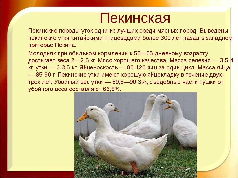 Сколько живут гуси: обстоятельства, влияющие на продолжительность жизни
