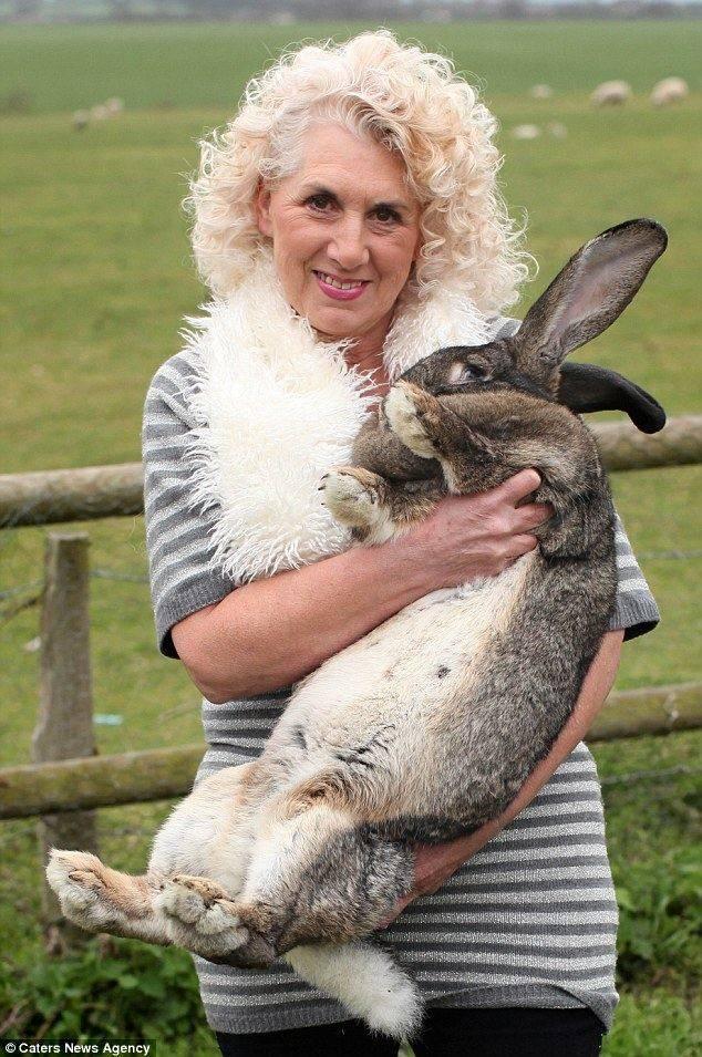 Гиганты и карлики в мире кролей