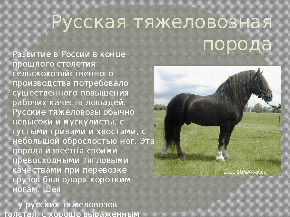 Самые красивые породы лошадей: список с названиями и описанием