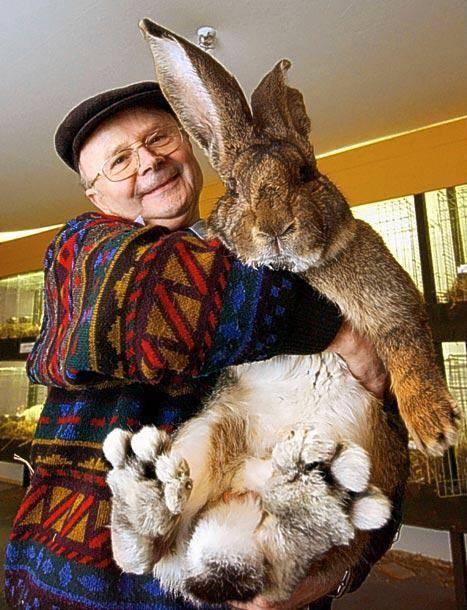 Самый большой кролик в мире: породы, фото, описание