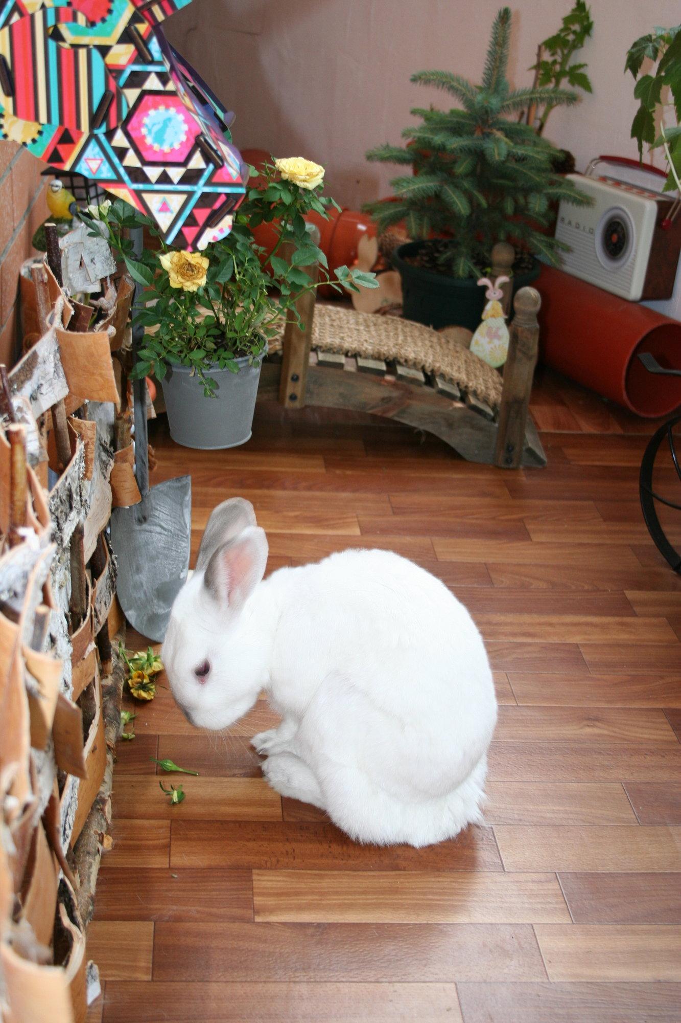 Декоративные кролики: уход и содержание в домашних условиях | «твой кролик»