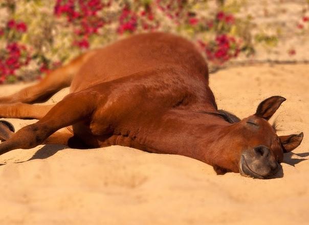 16 странных привычек сна в мире животных :: инфониак