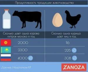 Сколько литров молока дает коза в день и другие вопросы по доению