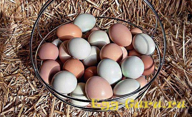 О яйцах цесарок: как они выглядят и чем отличаются от куриных — сравнение
