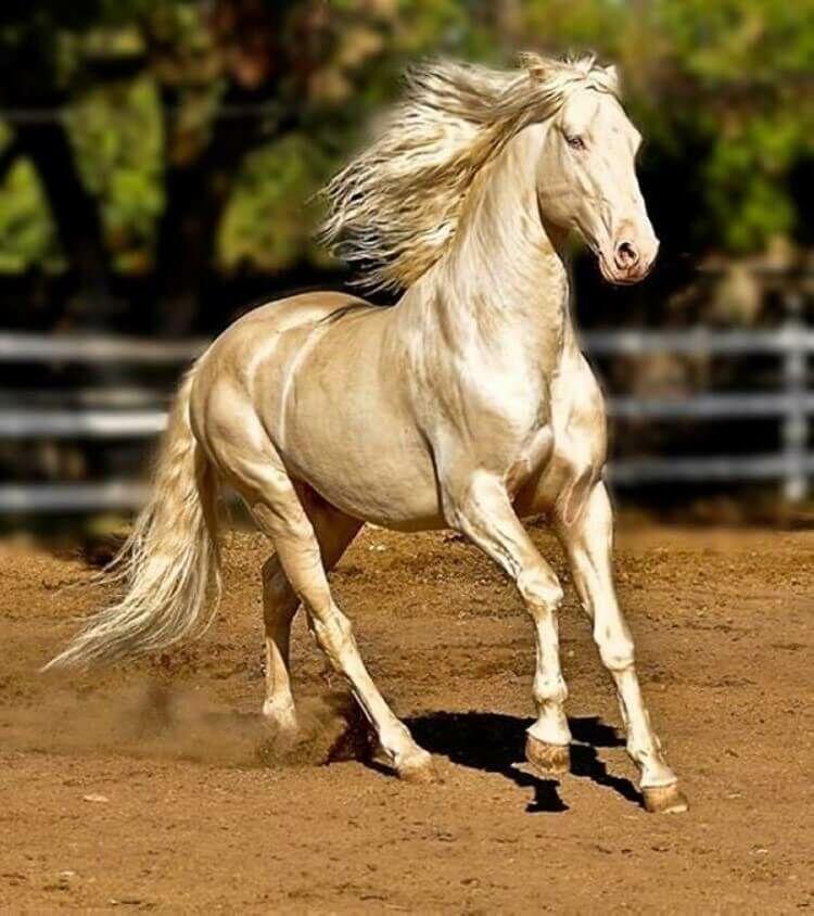 Топ-5 самых красивых лошадей в мире: рейтинг красивых пород с фото
