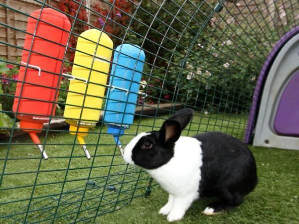 ✅ можно ли купать кроликов: как мыть декоративного кроля в домашних условиях - tehnomir32.ru