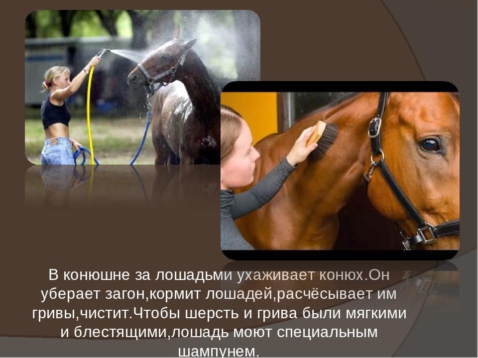 Разведение, уход и содержание лошадей