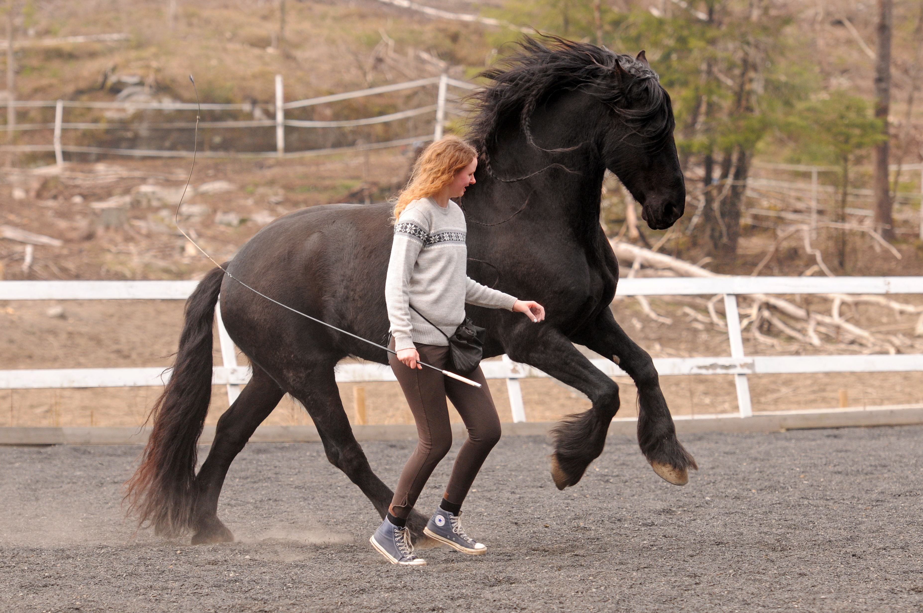 Обучение лошади верховой езде: привыкание, посадка, использование шенкеля