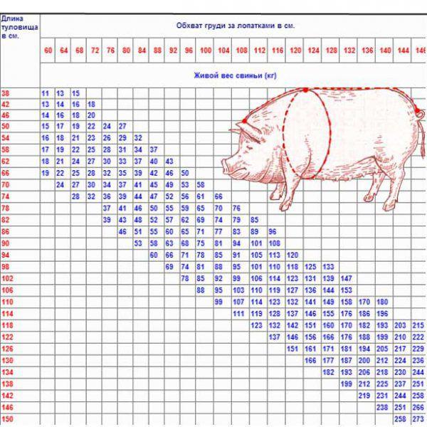 Сколько весит свинья: таблица измерений, самостоятельное определение