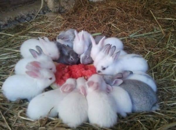 Можно ли давать кроликам апельсиновые корки (фото и видео)