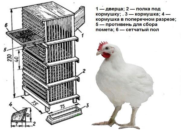 Клетки для цыплят (33 фото): как их сделать своими руками? чертежи и размеры переносных конструкций. как правильно построить клетку для маленьких суточных цыплят?