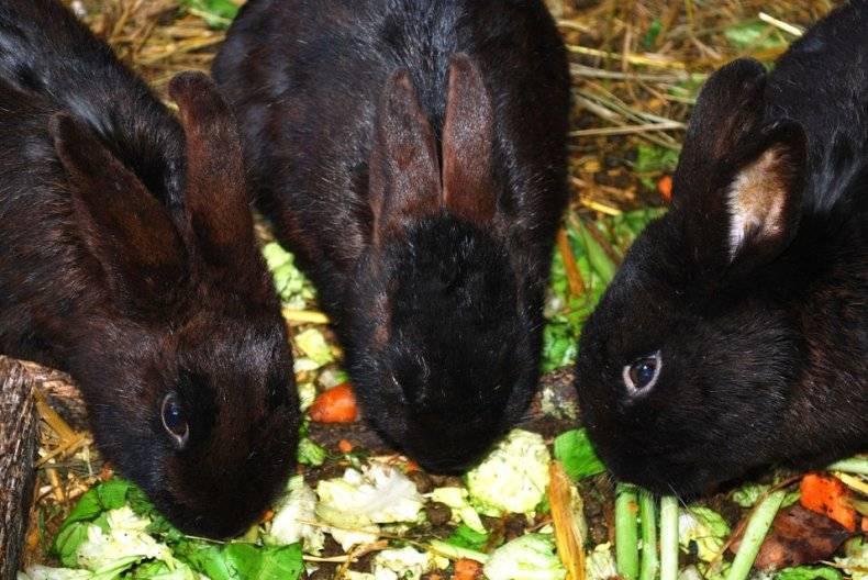 Можно ли кормить кроликов яблоками: с какого возраста и в каких количествах можно давать