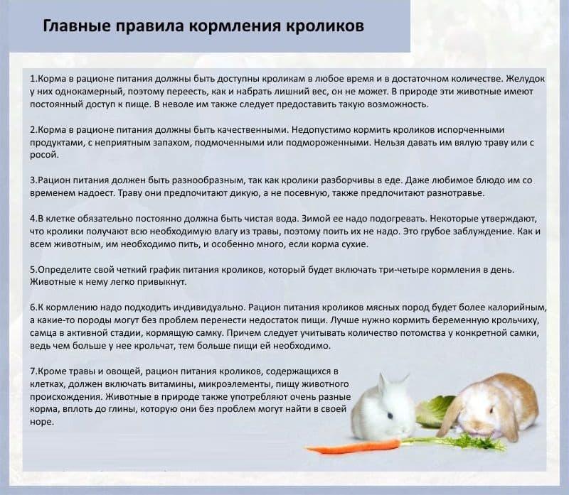 Какую роль в питании играет лебеда для кроликов?