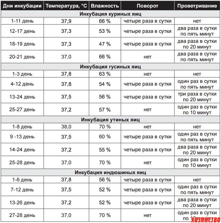 Инкубация индоуток в домашних условиях: режим, таблица