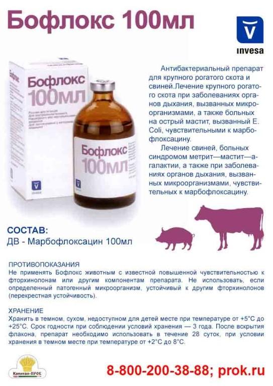 Болезни свиней: симптомы и лечение болезней свиней, опасные заболевания у поросят и взрослых свиней