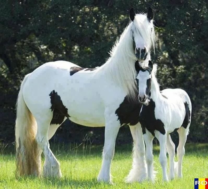 Чубарая масть лошадей - описание масти и её разновидностей