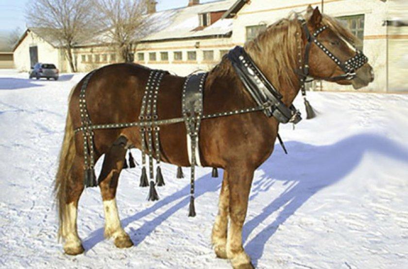 ✅ все о сбруе для лошадей: особенности и основные предметы упряжи для лошади - tehnomir32.ru