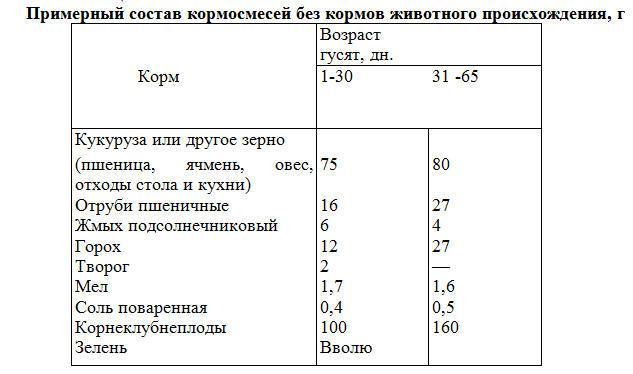✅ все о кормлении гусят с первых недель в домашних условиях: корма, правила - tehnomir32.ru