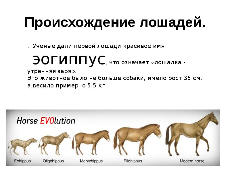 Иппология: наука о лошадях, что изучает, основные направления, откуда появились лошади