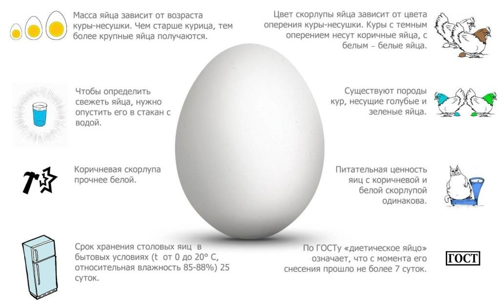 Вес одного куриного яйца: среднее значение и показатели у разных пород