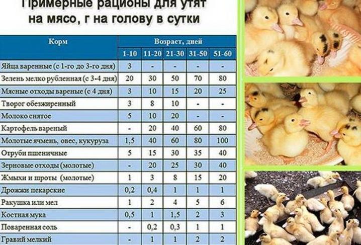 ✅ как ухаживать и кормить утят в домашних условиях: рекомендации для начинающих - tehnomir32.ru