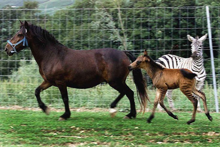 Что нужно знать о спаривании лошадей