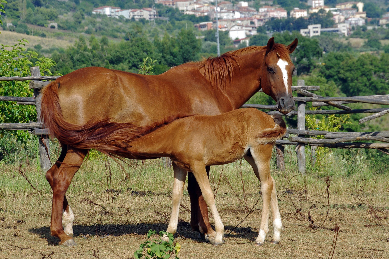 Что едят лошади - составляем правильный рацион