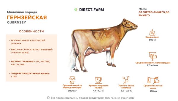 Схемы синхронизации полового цикла у коров | интернет-портал «вятская губерния»