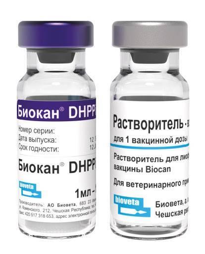 Прививки для поросят: схема вакцинации — selok.info