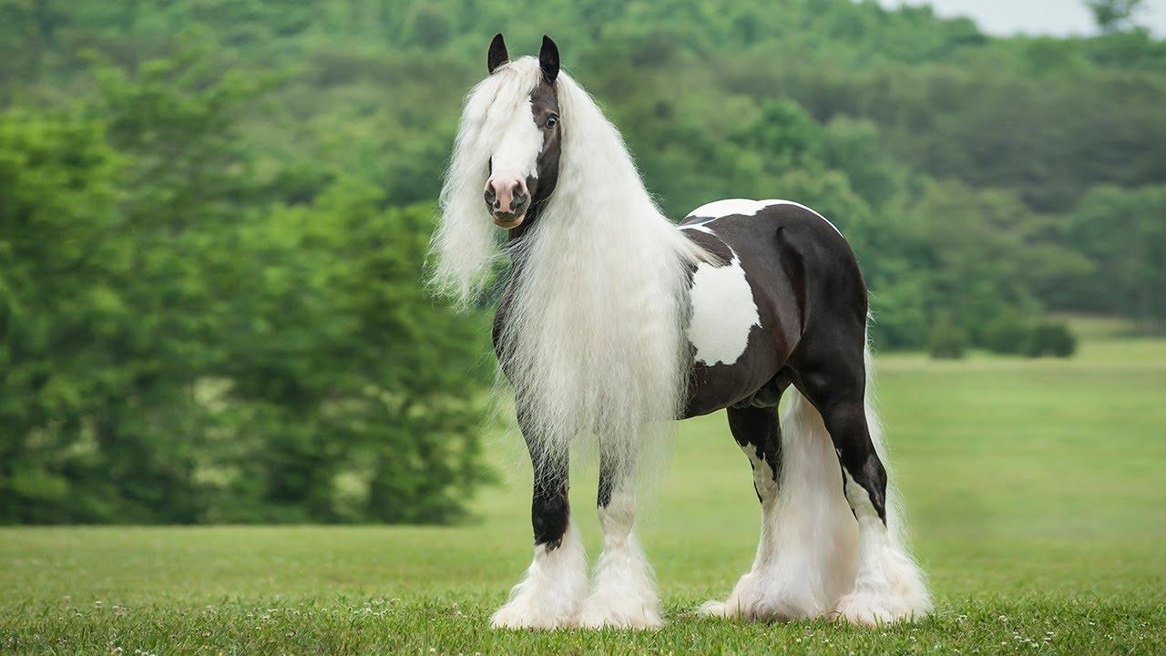 Самые красивые, экзотические и необычные породы лошадей в мире