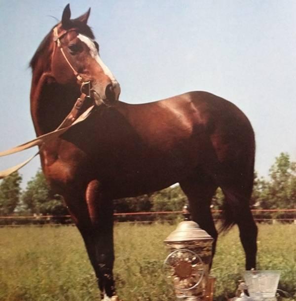 ⓘ энциклопедия - абсент, конь -  знаменитые лошади. абсент - чистокровный а