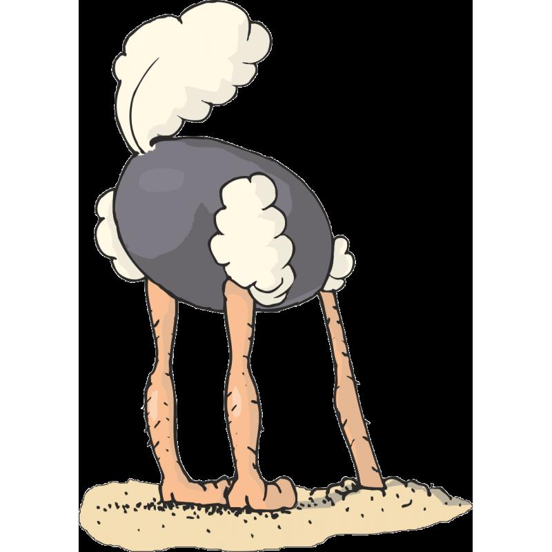 Прячет ли страус голову в песок: распространенные мифы. почему страус прячет голову в песок? так ли это на самом деле