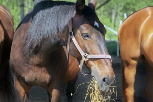 Содержание лошадей: 105 фото и полезные советы начинающим