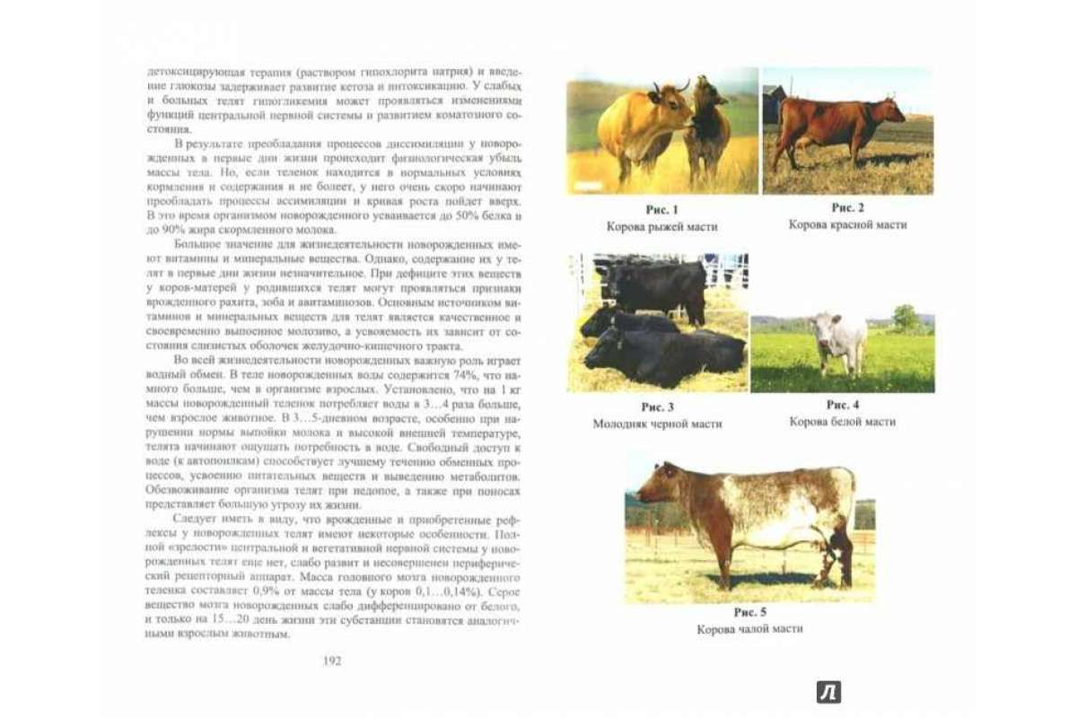 3 биологические и хозяйственные особенности крупного рогатого скота.