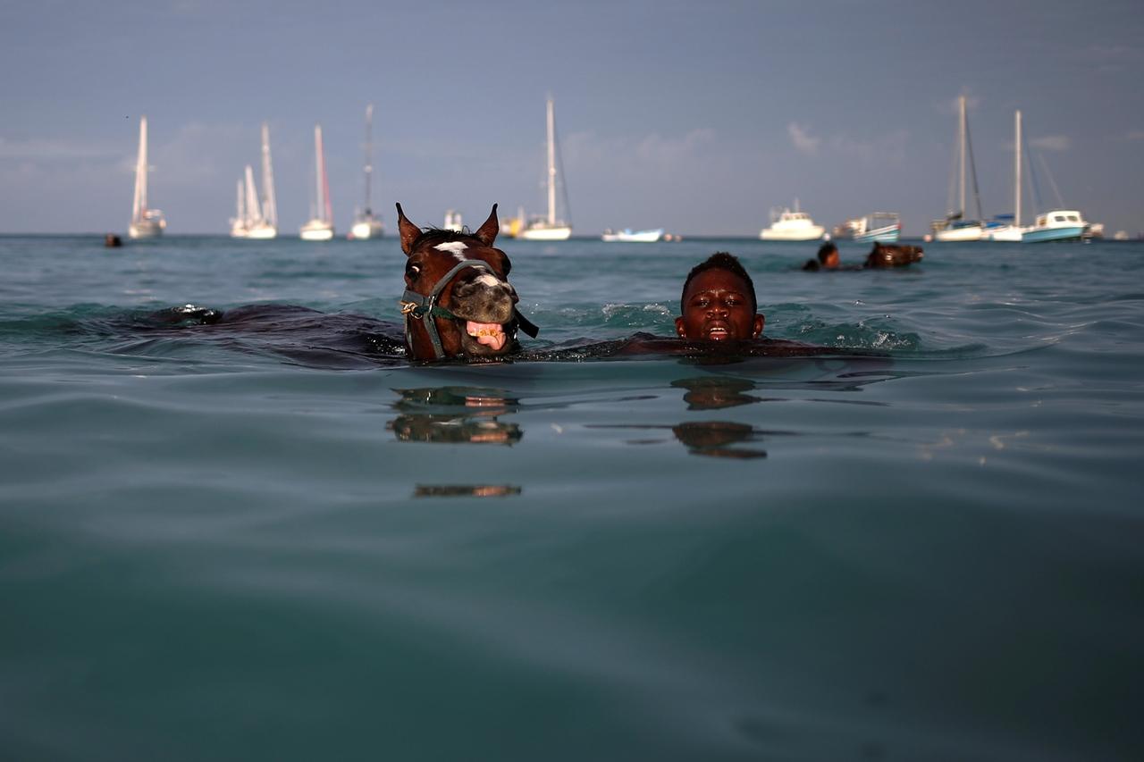 Сонник лошадь в воде плывет во сне