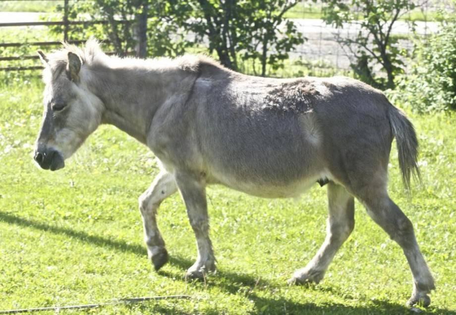 Животный мир: лошак и мул разница : labuda.blog животный мир: лошак и мул разница — «лабуда» информационно-развлекательный интернет журнал