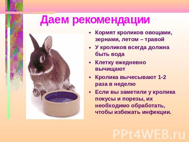 Чем нельзя кормить кроликов в домашних условиях а что можно давать | свое хозяйство