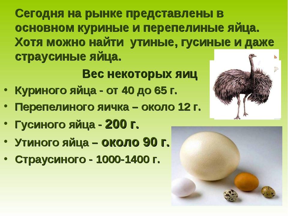 Как курица несет яйца: тонкости размножения кур