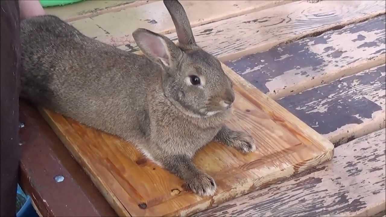 Сколько лет живут кролики: интересные факты и видео